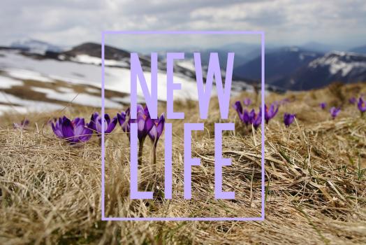 new life web